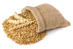 Wheat grain. Wheat ears and grain in small burlap sack Royalty Free Stock Image