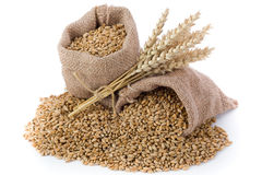 Wheat grain. Wheat ears and grain in small burlap sack Royalty Free Stock Photo