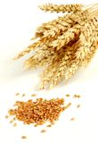 Wheat and grain Stock Image