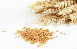 Wheat and grain. On a white background Stock Photo