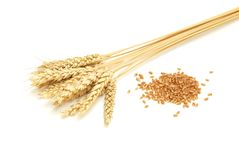 Wheat and grain royalty free stock images