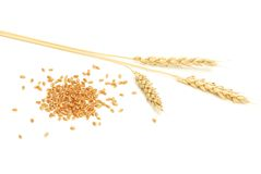 Wheat and grain. On a white background Royalty Free Stock Photo
