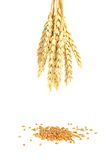 Wheat and grain. On a white background Royalty Free Stock Photos