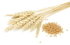 Wheat and grain. On a white background Royalty Free Stock Photography