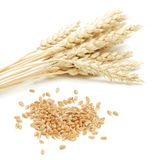 Wheat and grain Stock Images