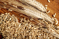 Wheat grain Royalty Free Stock Image