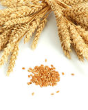 Wheat and grain Royalty Free Stock Image