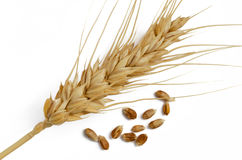 Wheat Grain And Ear Stock Photography