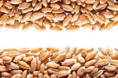 Wheat grain Stock Images