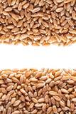 Wheat grain Stock Photos