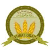 Wheat Grain. Stock Images