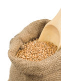 Wheat grain in burlap sack on white Royalty Free Stock Images