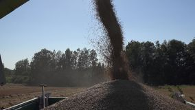 Wheat grain cereal unloading into truck on farmland field in end of summer. Tilt down. 4K. Wheat grain cereal unloading into truck on farmland field in end of stock footage