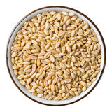 Wheat grain. Close up wheat grain in ceramic dish isolated on white - with path Royalty Free Stock Photo