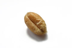 Wheat grain. In extreme close up on white background Royalty Free Stock Image