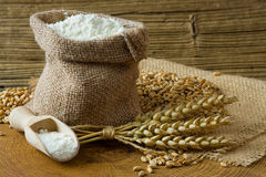 Wheat grain and flour Royalty Free Stock Photo