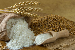 Wheat grain and flour. In small burlap bag Stock Photography