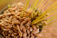 Wheat of grain Royalty Free Stock Photography