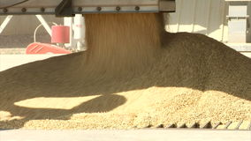 Wheat and grain flows into storage container. Video of wheat and grain flows into storage container stock video footage
