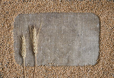 Wheat grain in the form of a frame on burlap Stock Photos
