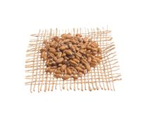 Wheat Grain. Grains over hessian fabric, isolated white background. Triticum aestivum is scientific name of Wheat cereal grain. Also known as Trigo portuguese stock photos