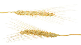 Wheat grain isolated on the white background Stock Photos