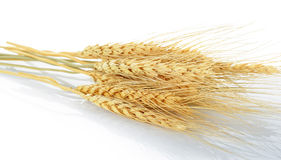 Wheat grain isolated on the white background Stock Image