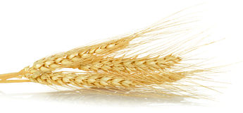 Wheat grain isolated on the white background Royalty Free Stock Images