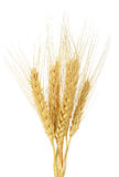 Wheat grain isolated on the white background Royalty Free Stock Photos