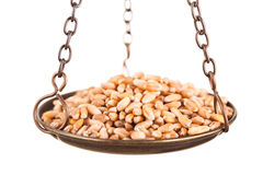 Wheat grain in old balance scale Royalty Free Stock Photo