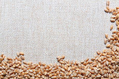 Wheat grain on sackcloth, Royalty Free Stock Images