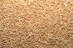 Wheat Grain seeds Royalty Free Stock Image