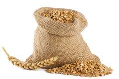 Wheat grain royalty free stock photos