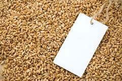 Wheat grain and tag price Stock Photography