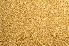 Wheat Grain Texture Royalty Free Stock Photography
