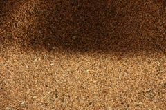 Wheat grain texture, top view stock images