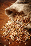 Wheat grain Stock Photo