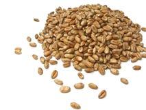 Wheat Grains Royalty Free Stock Photo