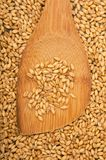 Wheat grains Royalty Free Stock Image