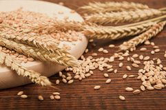 Wheat grains Stock Image
