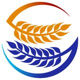 Wheat grains. Isolated illustrated wheat grains logo design Stock Photography