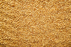 Wheat grains Royalty Free Stock Images