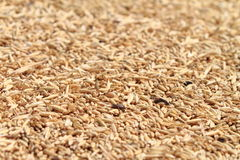 Wheat grains background Stock Photos