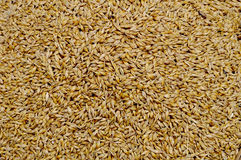 Wheat grains Stock Photography