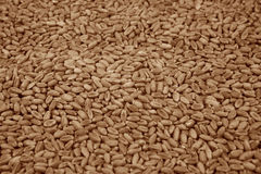 Wheat grains background. Detil of grains Royalty Free Stock Image
