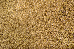 Wheat grains background stock photo