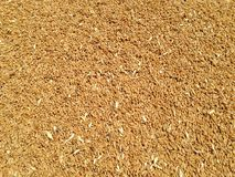 Wheat. Grains background. texture seen from above stock photos