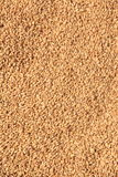 Wheat Grains. Stock Images