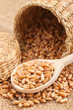 Wheat grains in basket and spoon Stock Photo