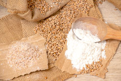 Wheat grains, bran and flour. Royalty Free Stock Image